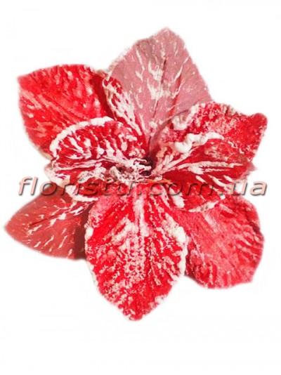 Пуансеттия заснеженная премиум Красная 25 см