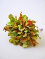 Добавка флористическая осенняя пучок 6 веточек 20 см