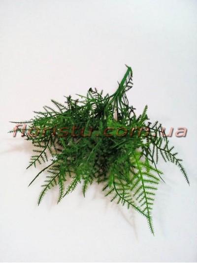 Аспарагус мини премиум класса Зеленый 30 см