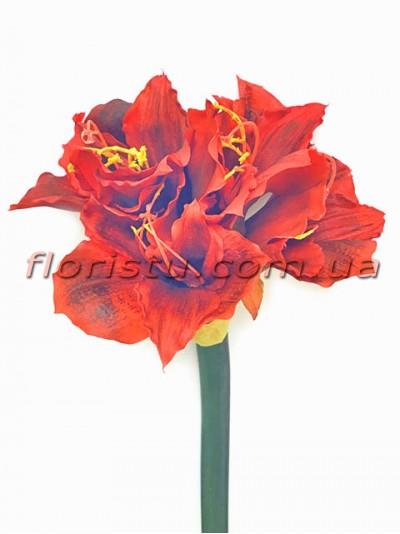 Амарилис латексный премиум класса Бордово-красный 78 см