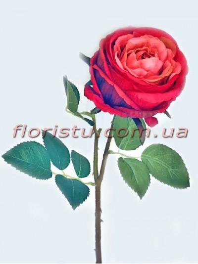 Пионовидная роза Девид Остин премиум класса Красная 60 см
