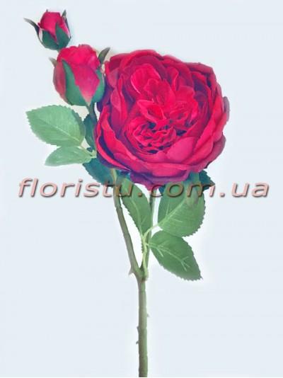 Пионовидная роза Девид Остин премиум класса Бордово-красная 60 см