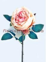 Пионовидная роза Девид Остин премиум класса Персиково-розовая 60 см