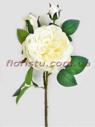 Пионовидная роза Девид Остин премиум класса Белая 60 см