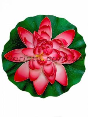 Лотос латексный плавающий Винно-розовый 28 см