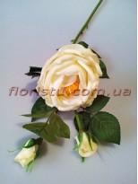 Роза чайная латексная Кремовая 65 см