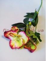 Хелеборус искусственный Бордово-салатовый 65 см