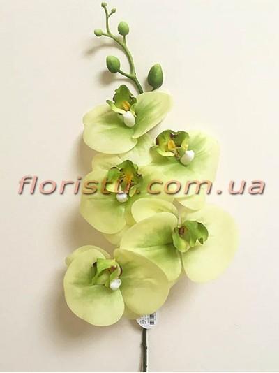 Орхидея фаленопсис латексная премиум класса Нежно-салатовая 5 гол. 84 см