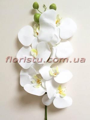 Орхидея фаленопсис Премиум Белая гол.11 см 98 см
