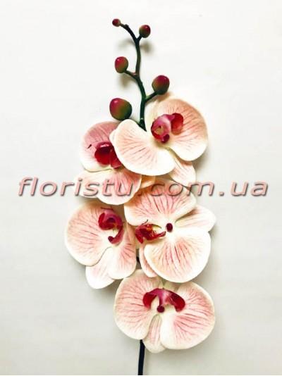 Орхидея фаленопсис латексная Премиум Кремово-бордовая гол.10 см 87 см