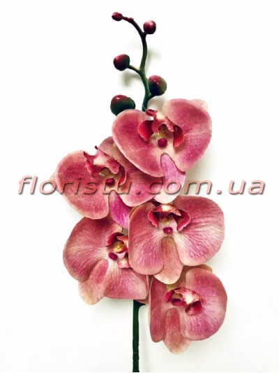 Орхидея фаленопсис латексная Премиум Винно-бордовая гол.10 см 87 см