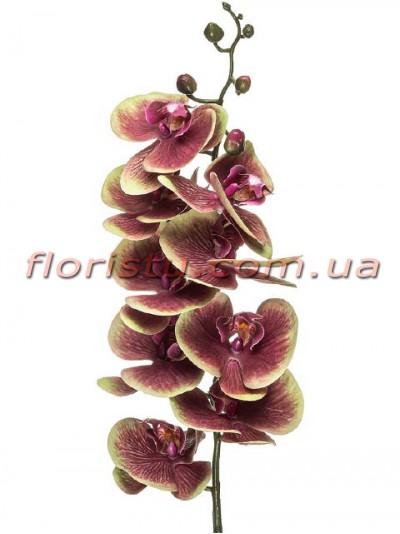 Орхидея фаленопсис латексная Бордово-оливковая 9 гол. 80 см