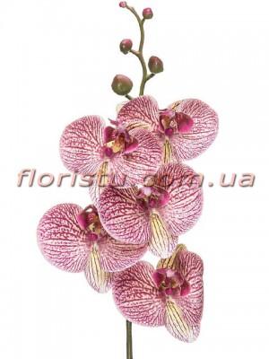 Орхидея фаленопсис латексная Премиум полосатая гол.10 см 87 см