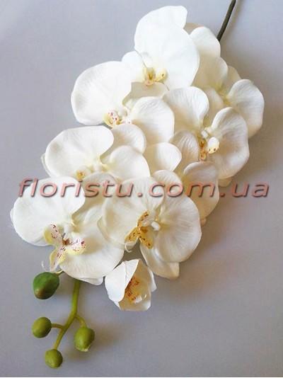 Орхидея фаленопсис Премиум Белая гол.11 см 1 м