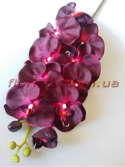 Орхидея фаленопсис Премиум Марсала гол.11 см 1 м