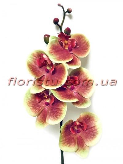 Орхидея фаленопсис латексная Премиум Бордово-желтая гол.10 см 87 см
