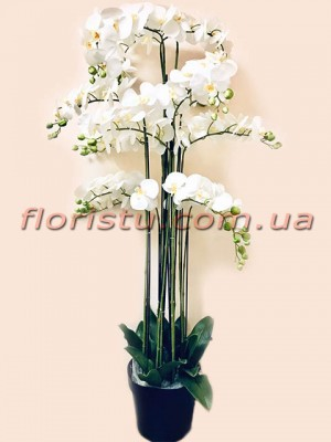 Орхидеи фаленопсис премиум класса в вазоне Белые 13 веток 150 см