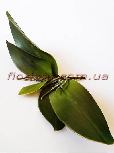 Листья орхидеи латексные с корнем премиум класс 21 см