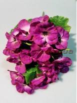 Букет Анютины глазки малиново-фиолетовые 20 гол. 6 см