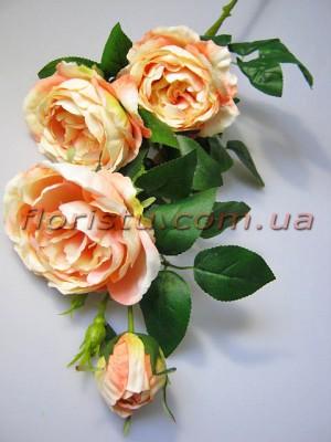 Роза Остин персиковая гол. 9 см