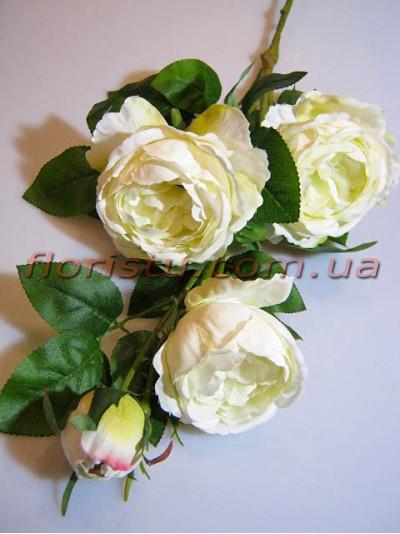Роза Остин белая гол. 9 см