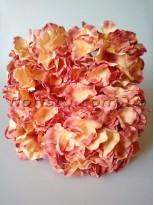 Гортензия премиум Винтаж кремовый+фламинго 6 гол. по 15 см