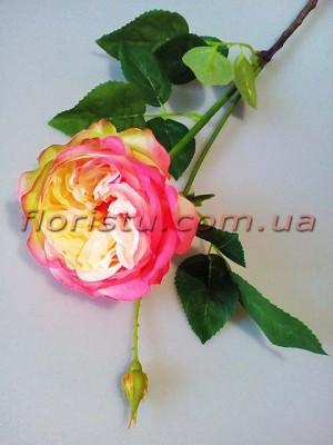 Роза Девид Остин премиум класса Кремово-розовая 65 см