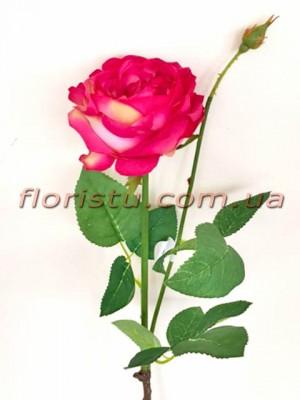 Роза Девид Остин премиум класса Сочно-розовая 65 см