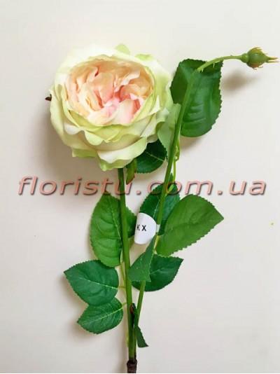 Роза Девид Остин премиум класса Салатово-розовая 65 см