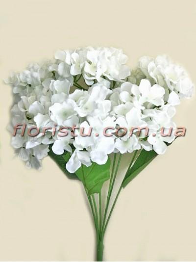 Гортензия премиум класса Белая 7 гол. 15 см