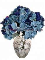 Гортензия премиум Винтаж синяя 6 гол. 40 см