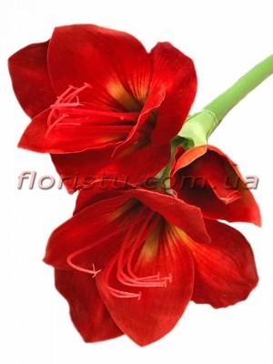 Амарилис премиум класса Бордово-красный 78 см