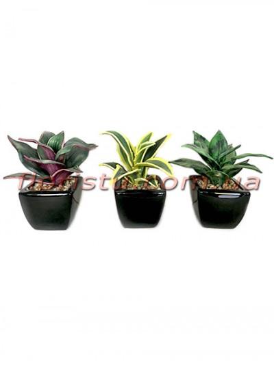 Искусственные растения в керамических кашпо набор 3 шт. 15 см