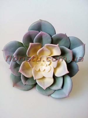 Эхеверия Каменная роза искусственная дымчато-серая 12 см