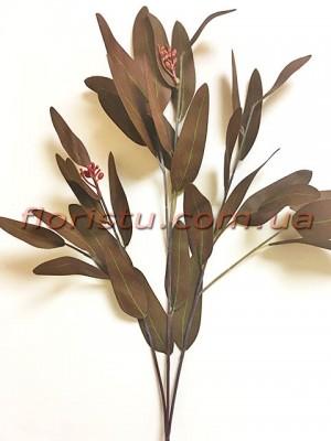 Эвкалипт глобулюс латексный Коричневый 83 см