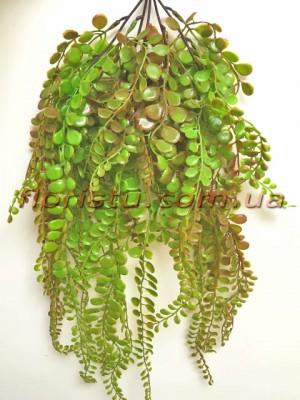 Пеллея ампельная пластик Бордово-зеленая 67 см