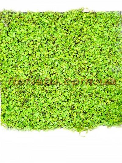 Коврик из искусственной травы зеленый Квадрат 50 см