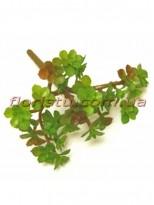 Суккулент искусственный Крассула бордово-зеленая 12*15 см