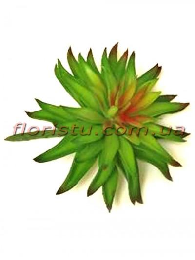 Суккулент искусственный Эхеверия бордово-зеленая 15 см