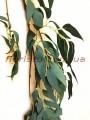 Искусственная лиана Ива дымчато-зеленая 170 см