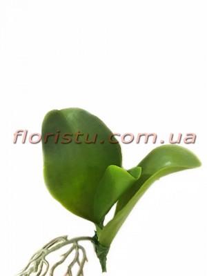 Листья орхидеи с корнем латексные миниатюрные 9 см