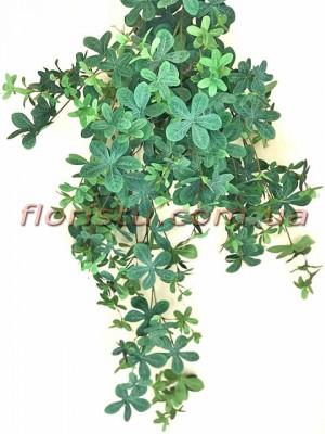 Лиана Шеффлера дымчато-зеленая ампельная премиум 90 см