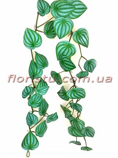 Лиана Пеперомия нежно-зеленая премиум 180 см