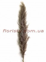 Пампасная трава сухостой Серая 150 см