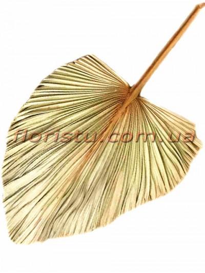 Лист пальмы сухостой Золото 50*60 см