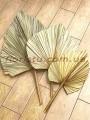 Лист пальмы сухостой Золото 25*28 см