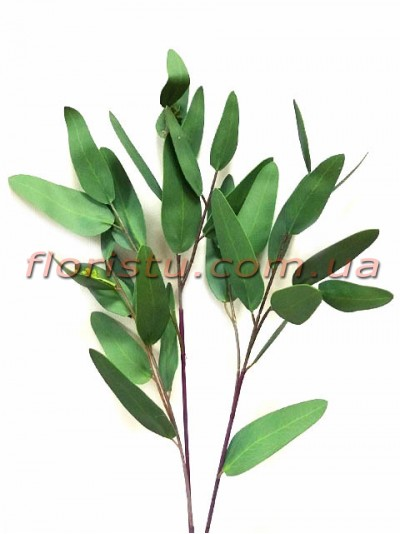 Эвкалипт глобулюс латексный Зеленый 81 см