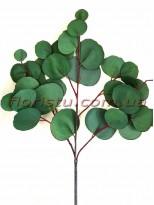 Эвкалипт популюс латексный Зеленый ветка 68 см