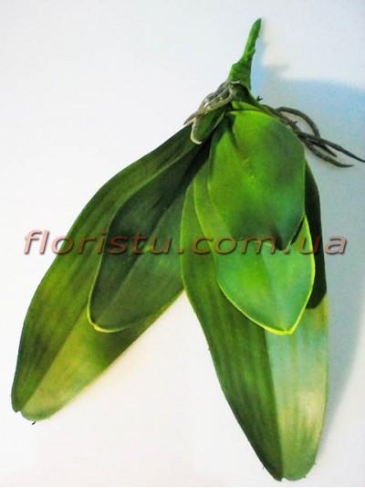 Листья орхидеи с корнем латексные большие 31 см