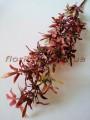 Ветка с мелкими листьями бордо 78 см